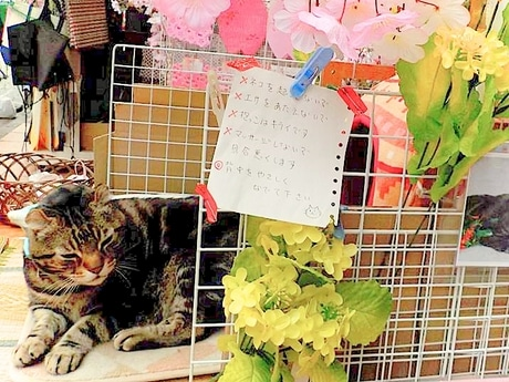 2月22日猫の日 千住の看板猫「なるとくん」にファン集まる
