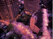 アークヒルズで「さくらまつり」 「桜のトンネル」やグルメ屋台も