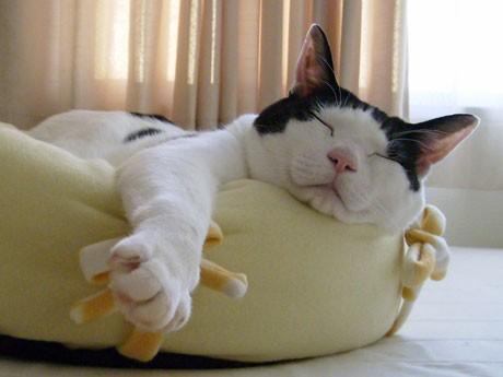 秋田・ゆるキャラのモデル猫「ニャジロウ」が永眠 「優しく、とぼけた性格だった」という「ニャジロウ