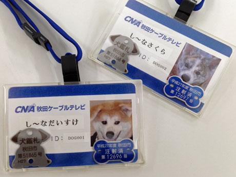 秋田犬2匹に発行された「秋田ケ...