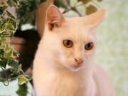 浅草経済新聞年間PVランキング1位は浅草橋の猫カフェ「Kei's」
