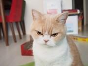 浅草橋で写真展「ねこ休み」 激おこ猫、残念なイケメン猫など勢ぞろい