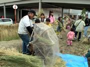 イオン草津、「足こぎ式脱穀機」で秋の実りを収穫-案山子作り体験も