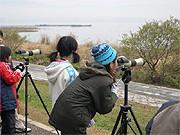 琵琶湖博物館で「冬の水鳥」観察会-オリジナル図鑑作成も