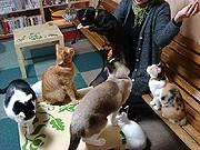 「鬼は外、猫は内」-南草津の猫カフェで猫まみれの節分イベント