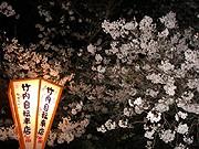 大津・膳所公園も桜満開-会社帰りのサラリーマンも夜桜見物