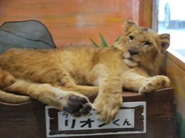 ピエリ守山にめっちゃ触れる動物園 - びわ湖大津経済新聞