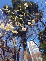 小石川後楽園で梅の見頃に合わせ各種イベント 週末の暖かさで開花進む