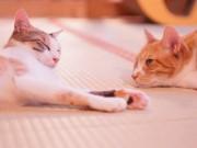 湯島で「ねこんかつ」に向けた婚活セミナー 猫カフェが猫好きカップル誕生を支援