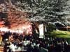 千葉・亥鼻公園で「千葉城さくら祭り」 ライトアップで夜桜も