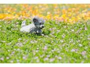 調布・仙川で「いぬPHOTOスクール」-ホリプロ犬部門が主催