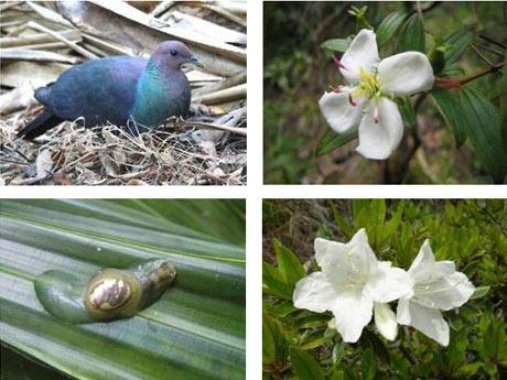小笠原諸島の自然の画像 p1_11