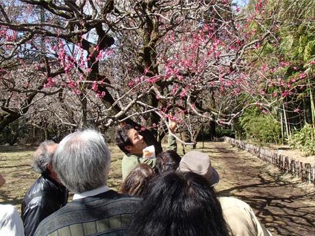 調布・神代植物公園で「梅まつり」 江戸時代の文献展示や講演会も