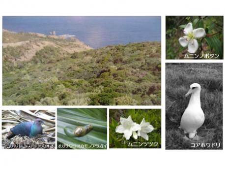 小笠原諸島の自然の画像 p1_10