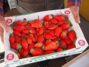 船橋・イチゴのシーズン到来 「ヤマタ農園」のサービスセットも販売開始に