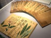 京橋LIXILギャラリーで薬草など江戸の植物図譜展