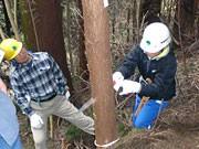 高尾山の国有林で「親子間伐体験」-国際森林年受けイベント開催