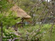 マイマイガ、飛騨山中で「ゾンビウイルス」に集団感染-大量死、住宅地でも確認