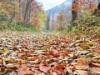 奥飛騨温泉郷・中尾で「森の文化祭」-星空観察、山岳救助隊ワークショップなど
