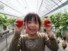 東大阪・長田でイチゴ狩りイベント 大粒イチゴに驚き、家族連れでにぎわう