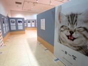弘前で「人生はニャンとかなる!」 東北初開催、猫作品77点展示