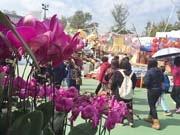 旧正月の訪れ、香港各地で「年宵花市」始まる 酉テーマや政治風刺も