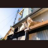 WACCA池袋で猫イベント「猫の世界」 写真展やアトリエマーケットなど