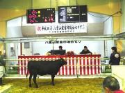 石垣で子牛初競り 7年連続で過去最高値を更新