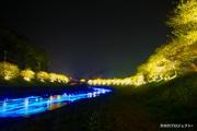 南伊豆で夜桜ライトアップ 川面にLED 5000個の「流れ星」