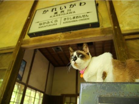 鹿児島・マルヤで犬猫の写真展 チャリティーカレンダー販売も