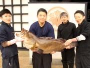 加古川の懐石料理店に30.8キロの巨大「クエ」入荷 50人がフルコース楽しむ