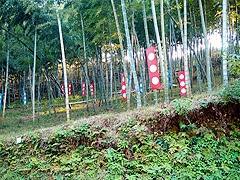 竹林を利用したインスタレーション