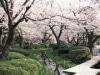 兼六園「観桜期の無料開園」が間近に-開花予想日は4月1日