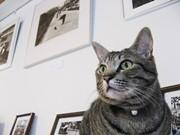 写真家・甲斐扶佐義さんの「ねこ写真展」、京都の猫ギャラリーで開催