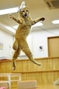 京都の猫カフェで「アクティブにゃんこ撮影会」-「空飛ぶ猫」に挑戦も