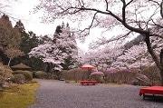 京都の1日限定100人の庭園 春の一般公開始まる