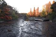 井の頭公園の弁天池で「かいぼり」進む 池底歩くツアーも