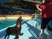 高知・桂浜水族館にトドの赤ちゃんが バレンタイデーに命名式も