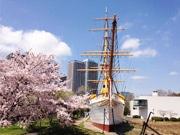 東京海洋大「明治丸」臨時公開 さくらまつりに合わせ、ライトアップも