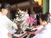 亀戸天神社に太宰府から「梅の使節」 「飛梅」伝説にちなんで