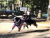 熊谷のドッグランが6周年 犬同士の相性でエリア分け