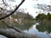町田・薬師池公園「かいぼり」終了 スッポンやモツゴなど在来種の放流も