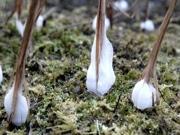 自然がつくる氷のアート 町田・薬師池公園に「氷の花」出現