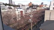目黒川の桜を生配信 映像配信サイト「AmebaFRESH!」で13万視聴を記録