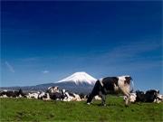 富士宮市の学校給食、地元産牛乳導入へ