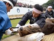 奈良で伝統行事「鹿の角切り」始まる 勇壮な勢子の姿に歓声