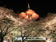 としまえんで「桜まつり」 開花予想は3月25日ごろ