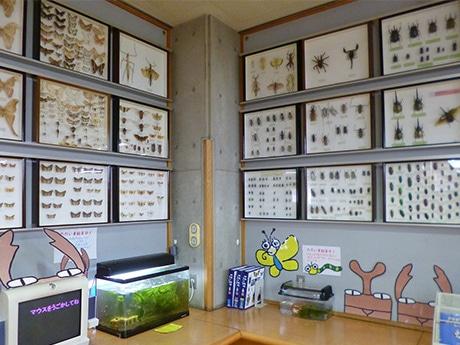 稲荷山図書館で「昆虫食」講演会 昆虫食べる未来を語る