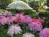 NYボタニカルガーデンで日本の菊の展覧会 日本酒の試飲会も