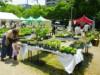 西宮市役所前で「フラワーフェスティバル」 園芸教室やワークショップも